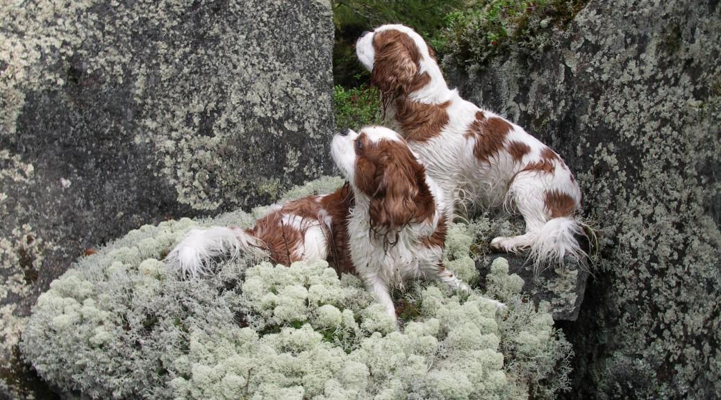 Den berättar om tre hundar och dess äventyr och livssituation under en dag.